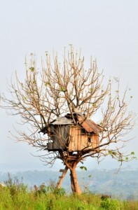 What Dad Really Wants for Father's Day This Year is a Grown-up Version of His Boyhood Tree House. Photo Credit: anankkml / FreeDigitalPhotos.net